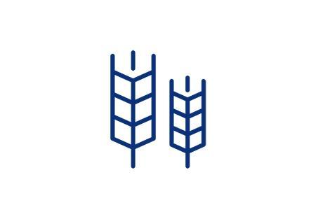 Ikona pszenicy